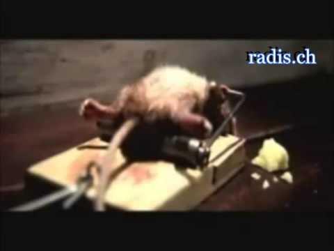 Lustige Werbung mit einer Maus
