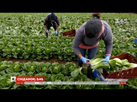 Легалізація заробітчан: Італія заманює іноземців на роботу, надаючи більше прав