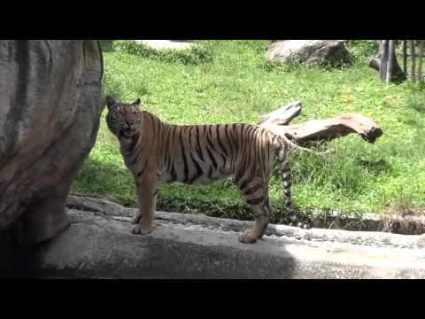 แหล่งสารสนเทศ สวนสัตว์สงขลา การบัญชีC SKRU
