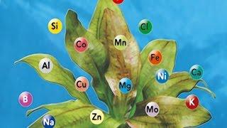 Развитие жизни на Земле. Урок биологии.
