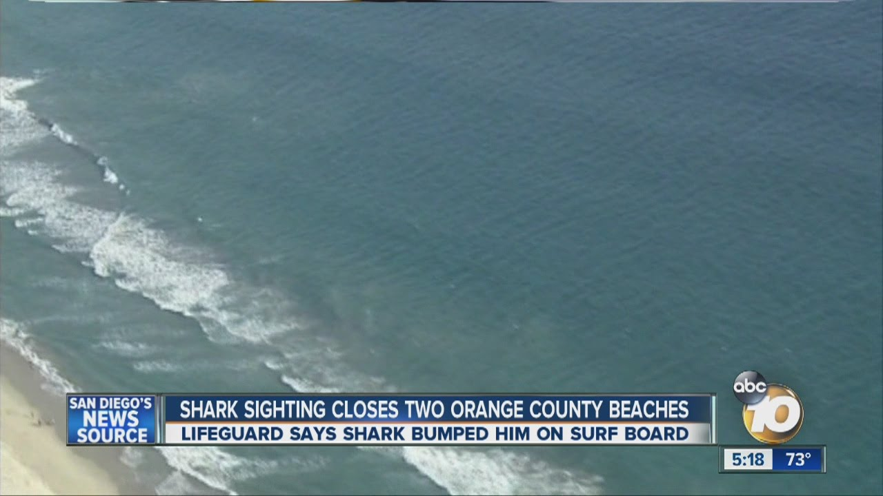 Sharks Close To Shore In Long Beach