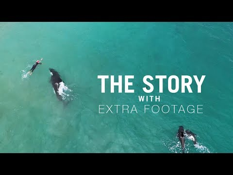the-story---orcas-approach-swimmer-extra-footage
