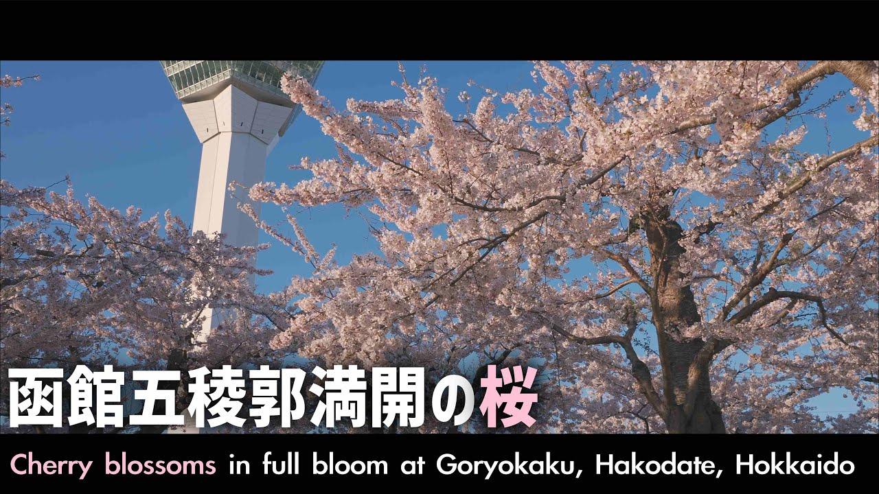 【予告編】函館五稜郭で満開の桜 出張車中泊の旅