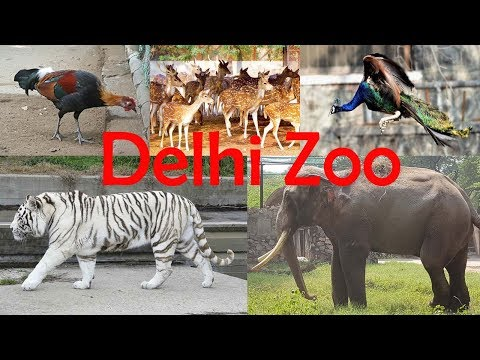 Delhi Zoo - All Animals