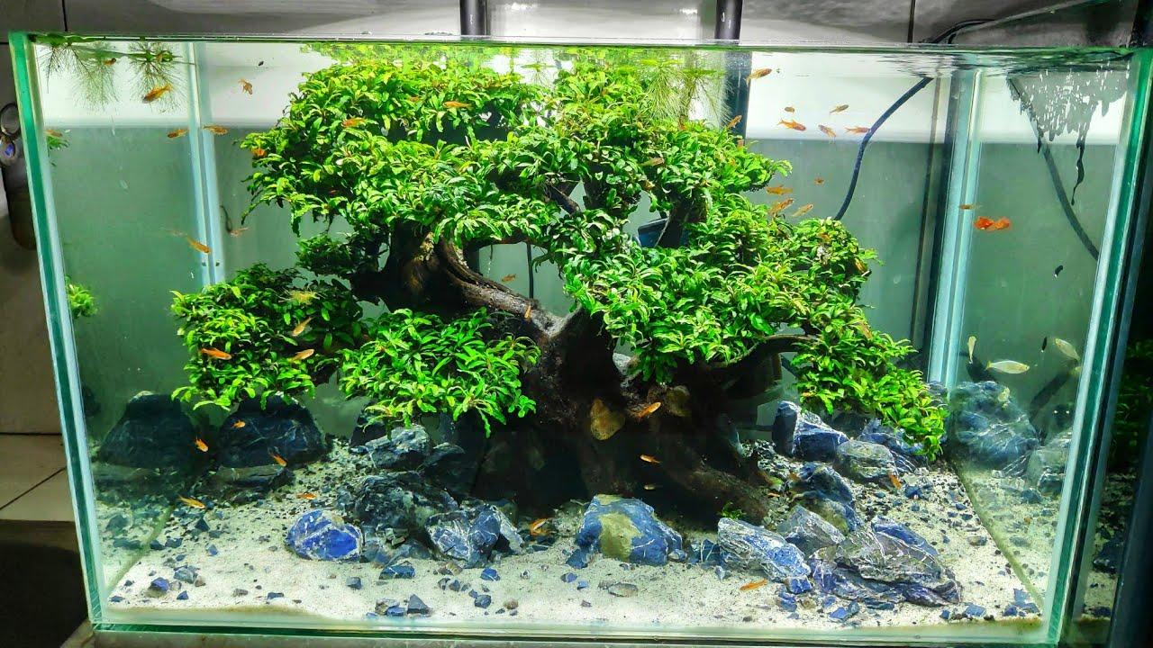 #177 Bonsai Aquascape setelah 2bulan,tanpa injeksi co2 ...