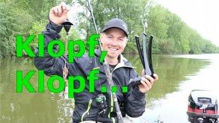 Maitour Mit Wallerholz Und Vertikalsystemen - Www.zeck-fishing.com