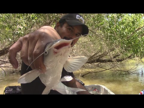 Fishing Flooded Timber For Shallow Water Catfish