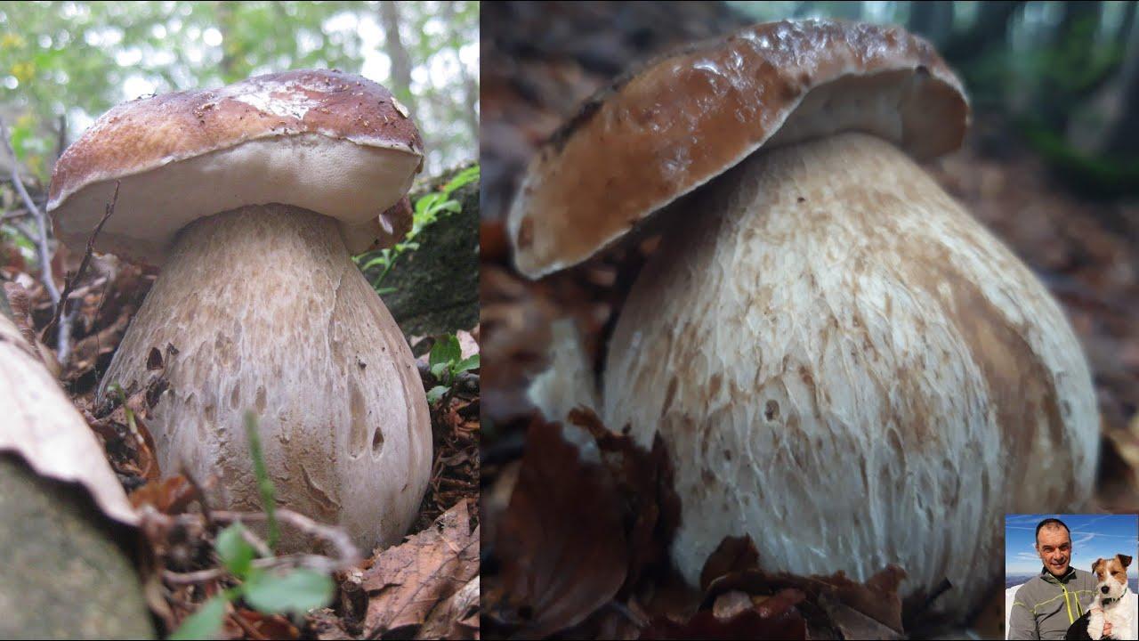 I sogni dei fungaioli - funghi porcini settembre 2020 - quarto episodio