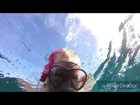 What to do in Vanuatu swim with dugongs