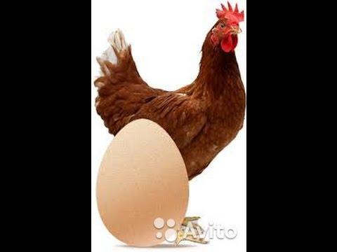 видео: Инкубация куриных яиц. Пошаговая инструкция. Для начинающих.