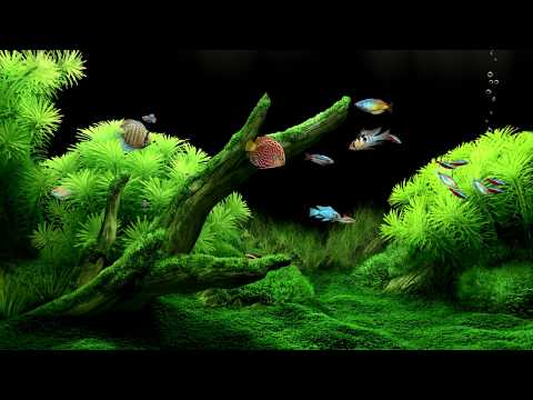 5 Hours 🐠🐟 Aquarium ⭐ FreshWater ⭐ 1080 HD ⭐ Relaxing Water Sounds