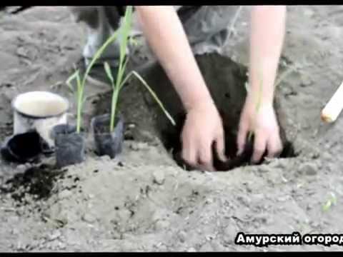 Бондюэль молодая кукуруза/Bonduelle Russian Commercial - YouTube