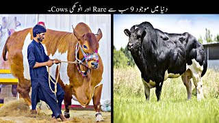 9 Most Unusual Cows In The World    دنیا میں موجود سب سے انوکھی گائے   Haider Tv