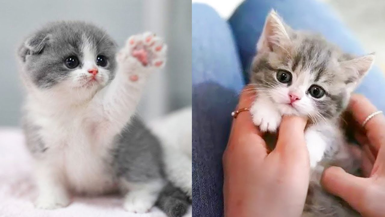 Baby Cats – Cute and Funny Cat Videos Compilation #36   Aww Animals