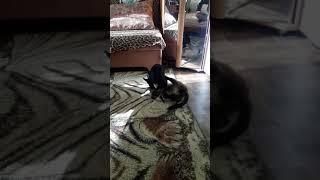 Кот и собака в одной квартире