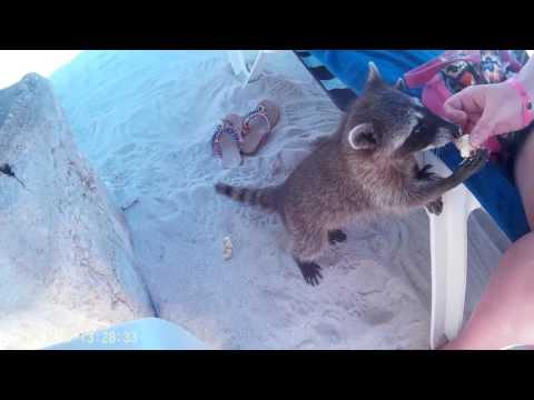 Snorkeling! Wildlife! Grand Sirenis Riviera Maya - Why you need to go !!!