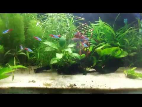 Fish tank setup tutorial for beginners 2017 youtube for Starting a fish tank for beginners