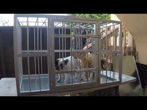 How to make a proper dog cage.