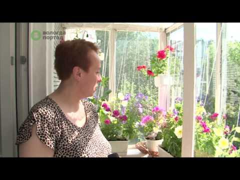 Оригинальные работы в номинации «Цветущий балкон» представили вологжане на конкурс «Цветущий город»