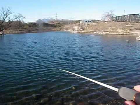 Hardy altex mark 5 no 2 with trout in fishing pond youtube for Hardiest pond fish