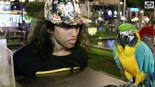 مستحيل شئ لا يصدق طائر البغبغان  يتكلم مثل الانسان مع ابانوب فلكس