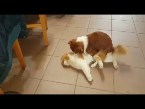 My dog fuck the cat