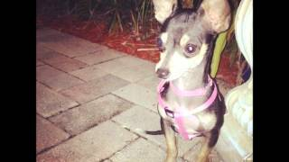 BRUCE LANGHORNE--Chihuahua