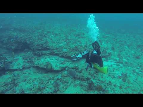 Spearfishing East Of Jupiter, FL - March 5, 2016