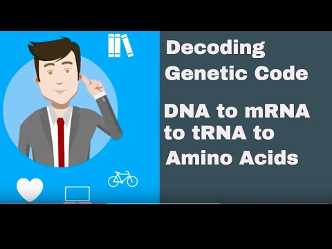 Decoding the genetic code from DNA to mRNA to tRNA to Amino Acids