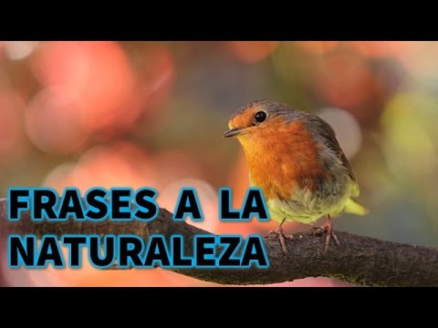 Frases a la naturaleza - Reflexiones