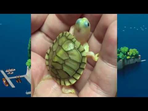 世界最もかわいい動物の赤ちゃん特集