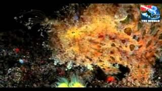 Nachttauchen Komodo-Nationalpark. Oktopus, Krebse, Tintenfische, Stargazer, Anglerfische