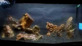 Allestimento acquario ADA - Aquarium Setup - Aquascape