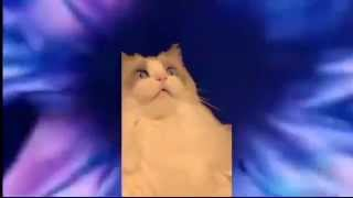 diş fırçalama ile transa giren kedi
