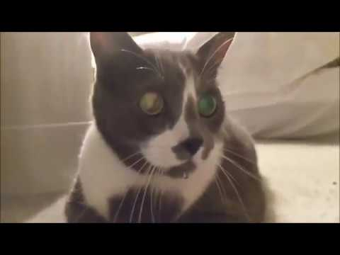 Funny Cats and Cute Kittens Meowing, Purring, and hissing Compilation (05-14-2019)