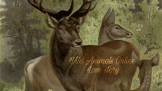 🐈Wild Animals Online🐈 Love Story