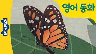 영어 동화 | 나비 동화 | 제왕나비에 꼬리표 달기 |…