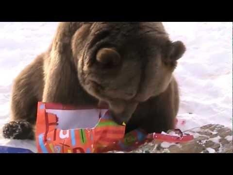 Bear Eating Birthday Cake