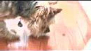 DogBlog TV: #16