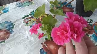 Июнь.  Мои цветочки .