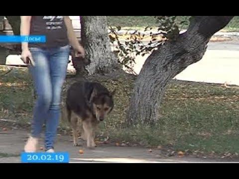 ТРК ВіККА: Черкасці просять владців встановити баки прибирання за тваринами