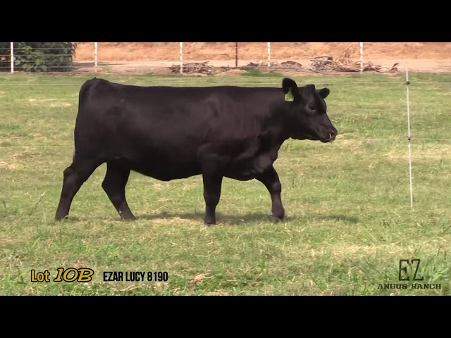 EZ Angus Ranch Lot 10B