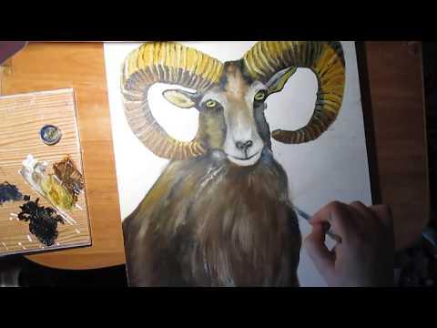 Горный Козел .Рисовать животных.