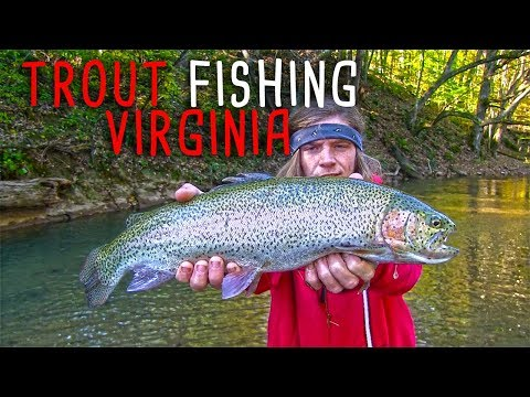Trout Fishing Virginia