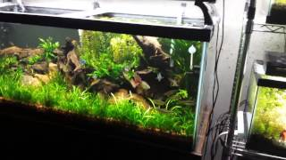 Changes Coming To The 75 Gallon Aquarium And More Fish Tanks