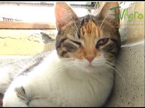 como saber si un gato tiene toxoplasmosis