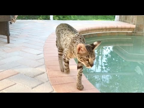 Cute Cats And Their Outdoor Adventure//Cute Cat Videos😸😸