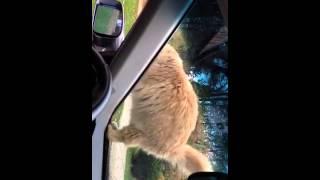 Lulu takes a ride