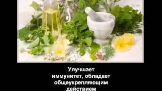Купить монастырский чай против гипертонии