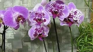 Как заставить орхидеи цвести-100%результат!.